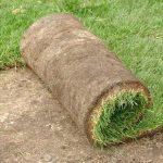 Caring For New Sod