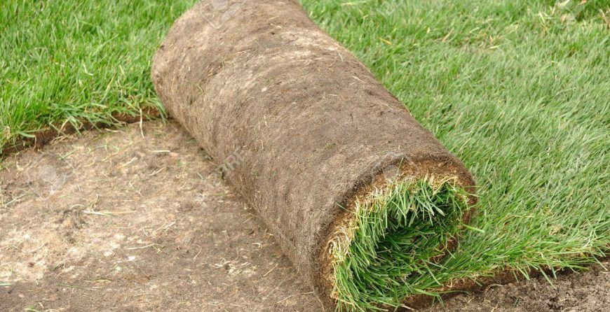 New Sod Installation