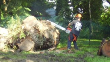 Tree Removal & Cutting